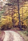 农村旅游足迹在秋天之前,红色过滤器 图库摄影