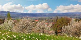 农村春天风景巴伐利亚人山麓小丘 免版税库存照片