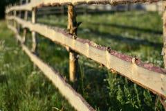 农村木树篱篱芭畜栏 免版税库存图片