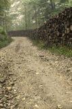农村森林公路 库存照片