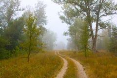农村森林有薄雾的路 库存图片