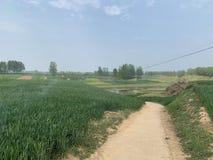 农村河路线和农田在中国! 库存图片