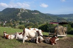 农村法国的横向 库存照片