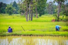 农村泰国农民,农夫简单的生活方式在t种田 图库摄影