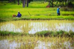农村泰国农民,农夫简单的生活方式在t种田 免版税图库摄影