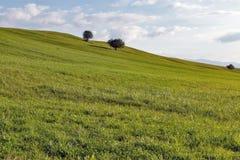 农村牧场地风景 库存图片
