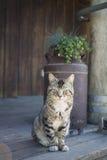 农村猫的门廊 库存照片