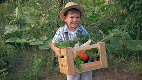 农村生活,草帽的滑稽的孩子在有未加工的素食者的手木板箱举行在菜园 股票视频