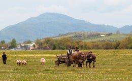 农村生活在Vrancea山村,罗马尼亚, 免版税库存图片