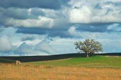 农村的乡下 库存图片