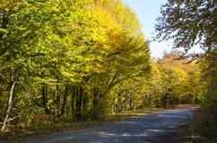 农村的森林公路 免版税图库摄影