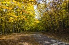 农村的森林公路 免版税库存照片