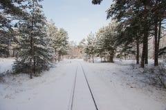 农村的横向 冬天铁路通过多雪的杉木 库存照片