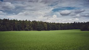 农村的横向 在云杉的森林下的草甸 免版税图库摄影