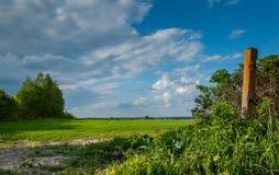 农村的横向 在灌木后的绿色农业领域在蓝色多云天空下 图库摄影