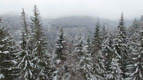 农村的横向 新年好 冻美丽的树 冬天传说 影视素材