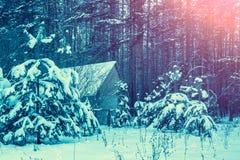 农村的横向 用雪盖的杉木森林 免版税图库摄影