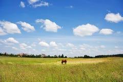 农村的横向 免版税库存照片