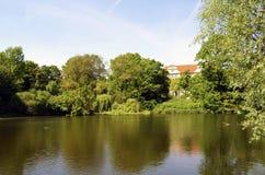 农村的池塘 图库摄影