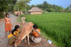 农村的生活方式 库存照片