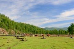 农村的田园诗 库存图片