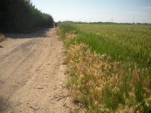 农村的路径 免版税库存图片