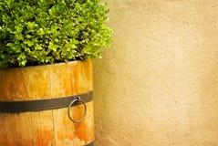 农村背景的庭院 免版税图库摄影