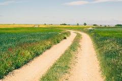 农村路在有谷物庄稼的乡下在春天期间 免版税库存图片