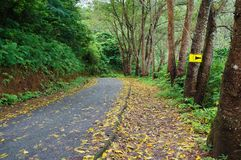 农村路在森林里北泰国 库存图片