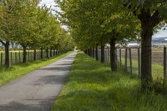 农村路标示用叶茂盛绿色树 免版税库存图片