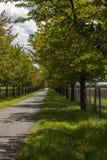农村路标示用叶茂盛绿色树 免版税库存照片