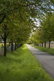 农村路标示用叶茂盛绿色树 免版税图库摄影