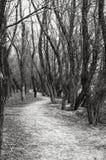 农村路通过森林在一秋天天 库存照片