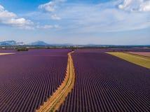 农村路通过美好的培养的淡紫色领域 免版税库存照片