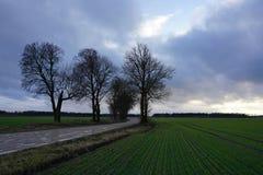 农村路,绿色领域,在蓝天的白色云彩 免版税库存图片