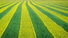 农村领域种植与空中黄色强奸和绿色的麦子今后线  股票录像