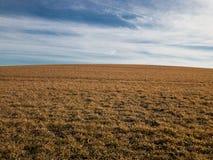 农村领域视图在早期的春天 库存照片