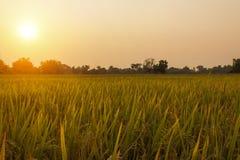 农村风景在与薄雾的黎明早晨 库存照片