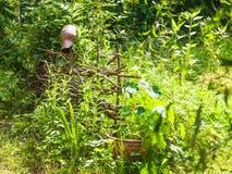农村风景在有板条篱芭的俄国村庄 图库摄影