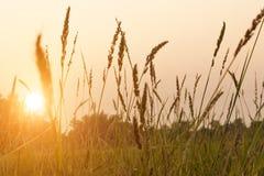 农村风景在黎明 免版税库存图片