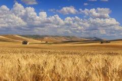 农村风景夏天 在普利亚和巴斯利卡塔之间:有云彩遮蔽的玉米田的乡下 意大利 库存图片