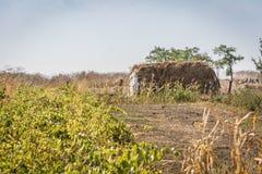 农村风景干草堆 免版税库存图片