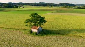 农村风景显露的鸟瞰图与谷仓的在一棵大树下,围拢与领域和草甸 影视素材