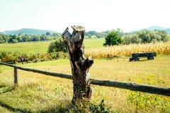农村风景树桩 库存照片