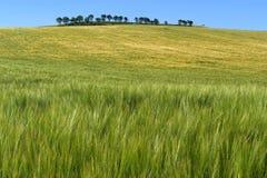 农村风景的,拉里奥哈五颜六色的玉米田 库存照片