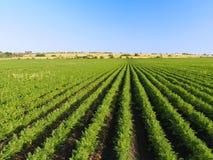 农村风景背景。 免版税图库摄影