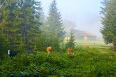 农村风景风景看法在喀尔巴阡山脉在Vorokhta,乌克兰附近的早期的有薄雾的早晨 免版税图库摄影