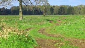 农村,欧洲风景 股票视频