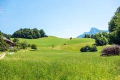 农村绿色的横向 免版税图库摄影