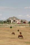 农村2匹庄园全部的马 库存图片